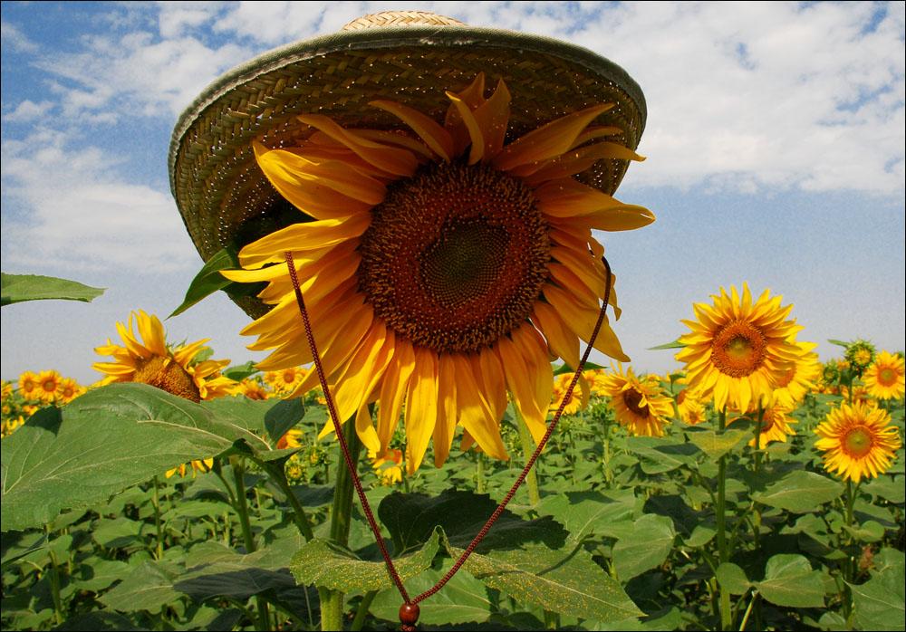 вами работает жаркое лето фото картинки зеленое поле